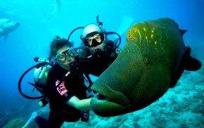 english-diving